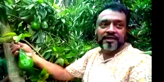 নতুন ফল চাষেও সফল নাঙ্গলকোট উপজেলা পরিষদ চেয়ারম্যান সামছুউদ্দিন কালু