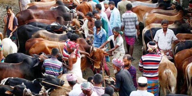 কসবায় পশুর হাটে গরু বাঁধার জায়গা নিয়ে বিরোধ: একজন নিহত