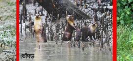 বিলুপ্তির পথে বণ্যপ্রাণীরা